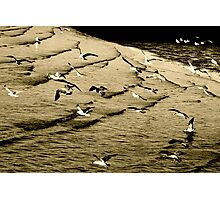 The gull's army of seabirds was forced to concede Photographic Print
