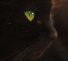 Hunting---Sooty by Kerensa Davies