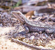 Jacky Dragon by inthewild