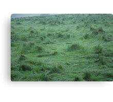 Whirlwind Grass Canvas Print