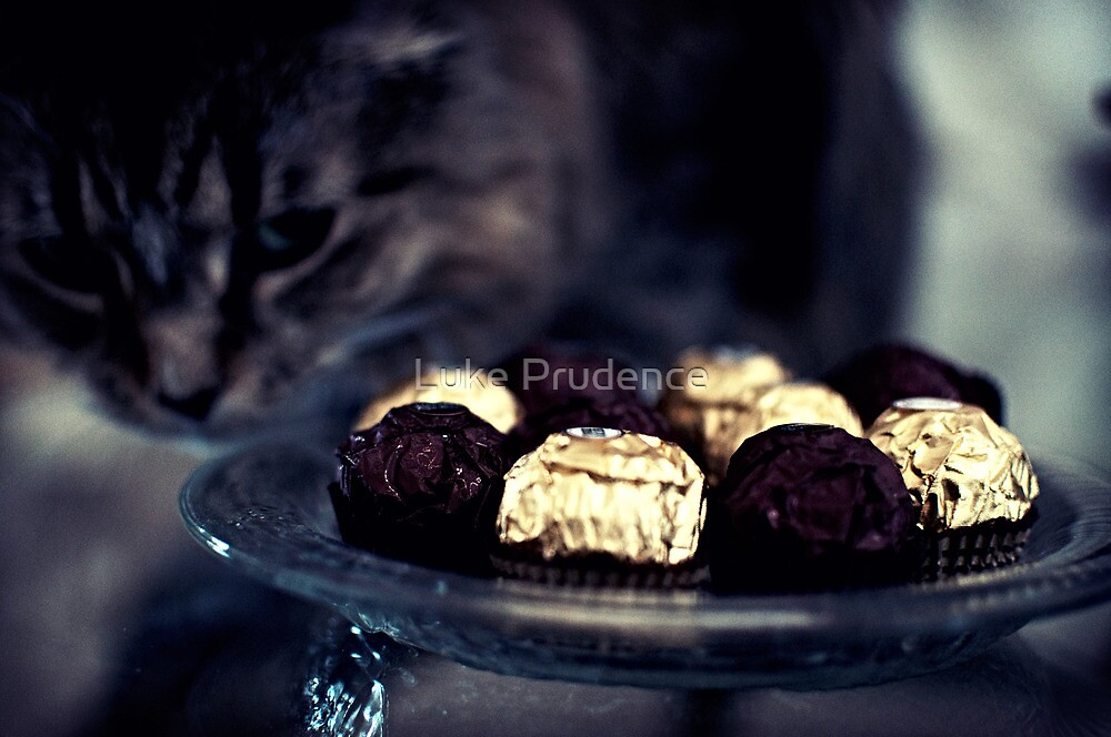 Chocolate's Not for You by Luke Prudence