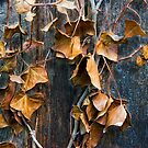 Brown Leaves on Wood Fence 4 by Randall Nyhof
