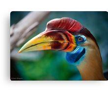 My new favorite bird in profile Canvas Print