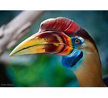 My new favorite bird in profile Photographic Print
