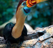 My new favorite bird posing for me by alan shapiro