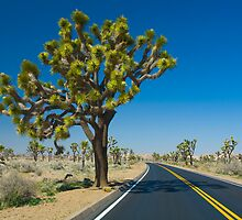 Joshua Tree 0371 by Randall Nyhof