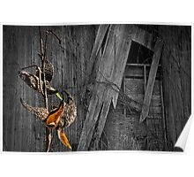 MilkWeed Pods and Barn Poster