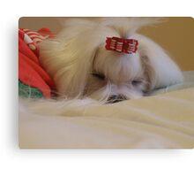 Sleeping maltese dog Canvas Print