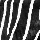 Zebra - Best viewed larger by Kutay Photography