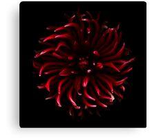 Red Spider Dahlia Canvas Print