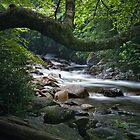 Smokey Mountain Stream 547 by Randall Nyhof