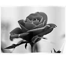 Red Rose in B&W Poster