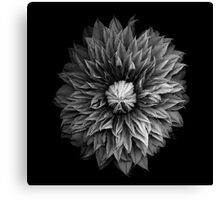 Monochrome Clematis Blossom Canvas Print