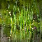 Water Reeds 032 by Randall Nyhof