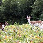 Pssst........... Bambi, this way  by larry flewers