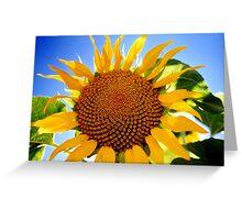 sunflower shining Greeting Card