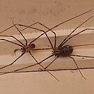 Spiders by Eeva47