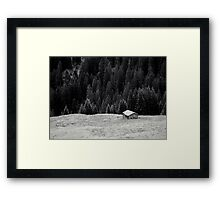 BEYOND FIRS Framed Print