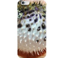 Young Puffer Fish iPhone Case/Skin