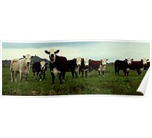 Tor and Cows Poster