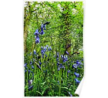 Bluebells from below Poster