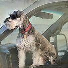 Working Dog by Kay Kempton Raade