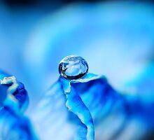 Blue- Macro Waterdrop Wall Art by bfphotoart