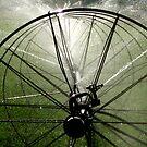 Sprinklers  - Light by Carin Fausett