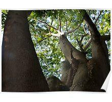 jungle tree - arbol de la selva Poster