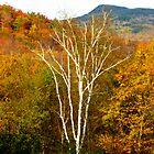 Striking Birch by A. Kakuk