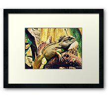 Chamelion Framed Print