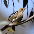 At the waterhole ... Fuscous Honeyeater by Kerryn Ryan, Mosaic Avenues