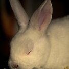 """""""Bunny Snooze"""" by Sophie Lapsley"""