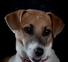 """This is My Better Side"" - Jack Russell by Sophie Lapsley"