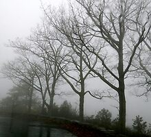 Fog in the Trees by ctheworld
