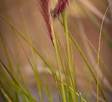 Furry Native Grass Spike by ScottH