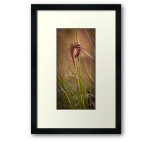 Furry Native Grass Spike Framed Print