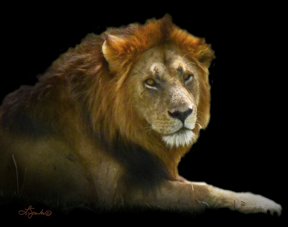 King of the Pride by Linda Sparks