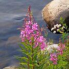 Artic Flower, Summer by SuddenJim