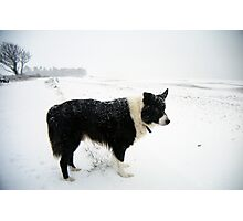 Whiteout! Photographic Print