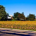 A last look at Minnesota by Bryan D. Spellman