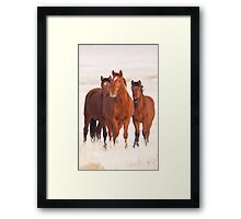 Frosted Grass Framed Print