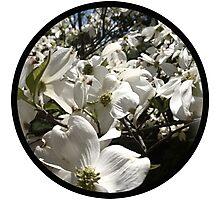 Summer Magnolia Photographic Print