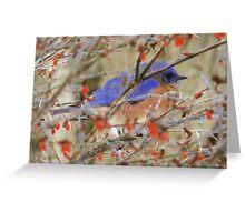Eastern Bluebird - Greeting Card  Greeting Card