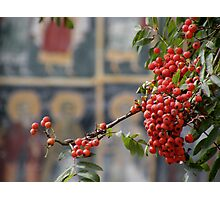 Berries on a church background Photographic Print