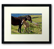 Horses In Landscape Framed Print