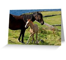 Horses In Landscape Greeting Card