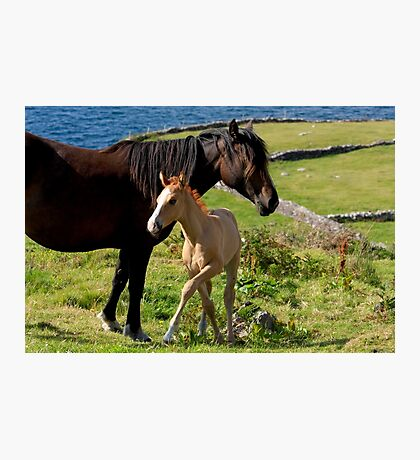 Horses In Landscape Photographic Print