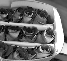 Paper Roses by claibornepage