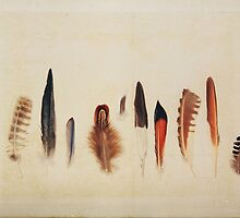 Feather Study no. 1 by Bethany Helzer